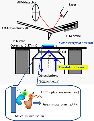 Surface And Nanoscience Laboratory Introduction Afm